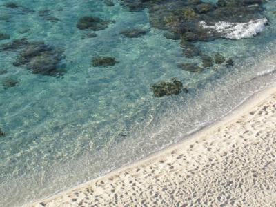 Palermo, allarme alga tossica a Sferracavallo ea Vergine Maria