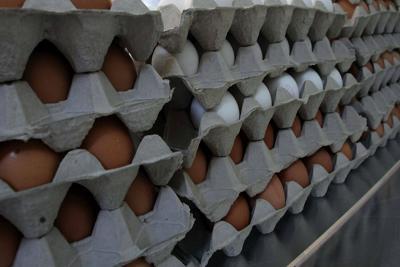Fipronil: arrivano le decisioni della UE. Richiamati lotti di uova nelle Marche