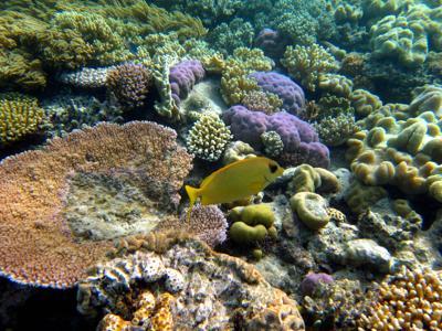 Il 93% della barriera corallina ha perso il colore — Greenpeace